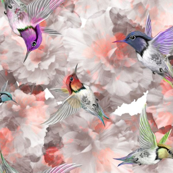 Kolibri3
