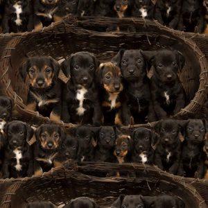 Bomuldsjersey med hundehvalpe *forudbestilling*