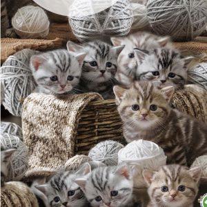 Bomuldsjersey med kattekillinger *forudbestilling*